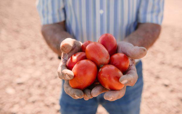 amy tomato farm.jpg